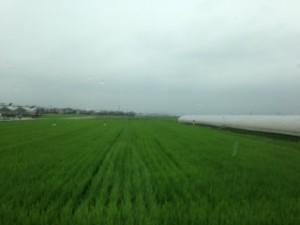 20140805雨
