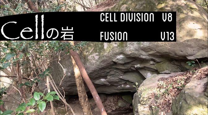 2/12 表八(Fusion)